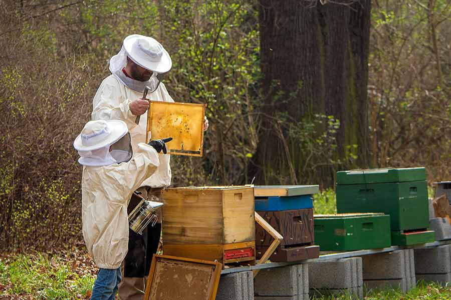 What is b roll-Unscripted-beekeepers inspect hives