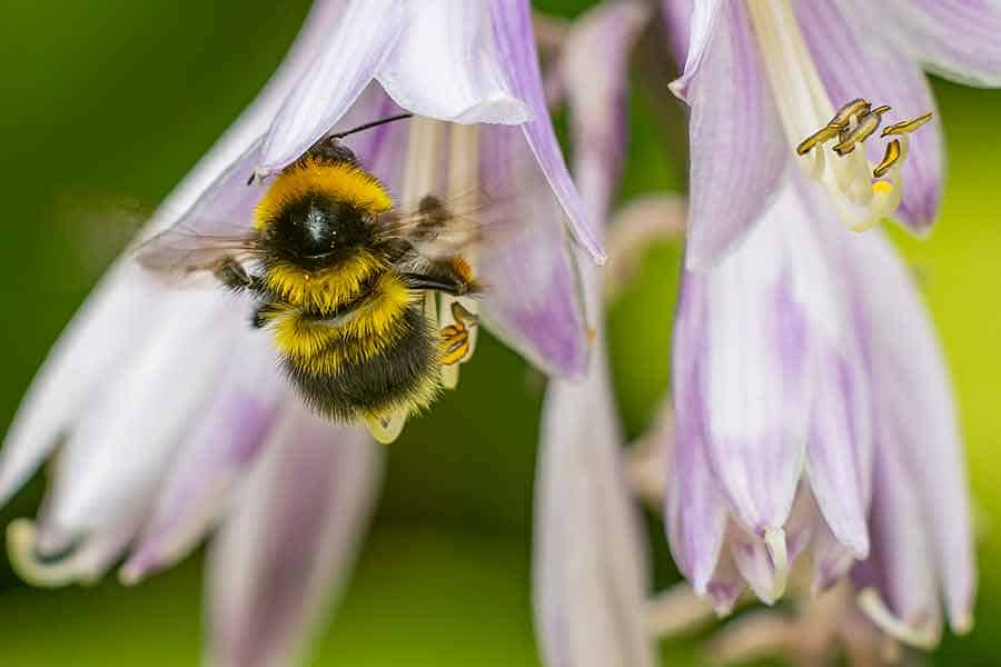 Bumble-Bee-150mm-with-54mm-extension-tunes